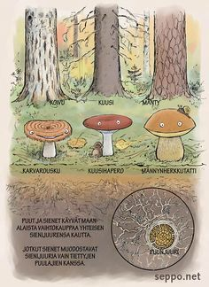 Finnish Words, Go Outdoors, Closer To Nature, Forest Animals, Science And Nature, Fungi, Botany, Fun Facts, Kindergarten