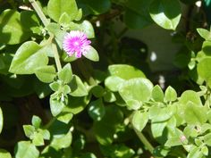 flores+silvestres+:+crecen+por+todos+lados+|+ahorayya2