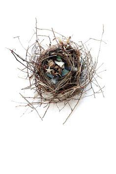 bower bird | STILL (mary jo hoffman)