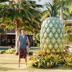 I wanna eat this giant pineapple! Lol.