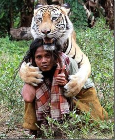 Friendship Of Man And Tiger in Indonesia