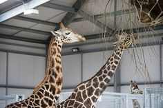 Twycross+Zoo+makes+appeal+to+local+gardeners