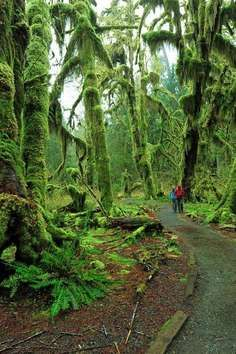 Hall of Mosses Trail, Forks | Roadtrippers