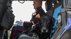 FOX NEWS: Hundreds give tearful farewell to heroic war dog