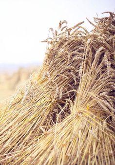 ルカ10:2ーそして、彼らに言われた。「実りは多いが、働き手が少ない。だから、収穫の主に、収穫のために働き手を送ってくださるように祈りなさい。