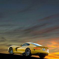 Cunning Yellow Viper! Watching the sun set!