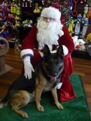 Tristan is an adoptable German Shepherd Dog Dog in Baltimore, MD. You can fill out an adoption application online on our official website.      This big and beautiful young man is Tristan! Trist...