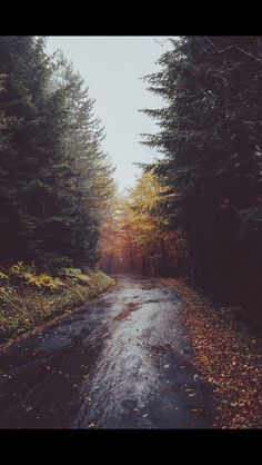 Rainy Fall Road - RC
