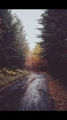 Rainy Fall Road - RC