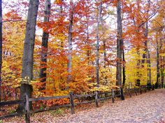 Walk into Autumn 8x10 Cleveland Metroparks Ohio by CountryDreaming, $29.95