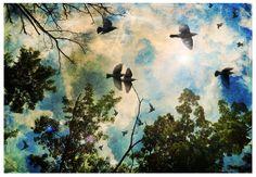 Birds filled the sky bird and tree art fine art by TarasArtHouse, $30.00