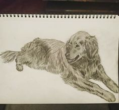 Tuli dog - golden retriever pet sketch in pencil ♥; CVale