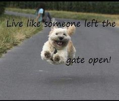 until the owner/police chase you down!