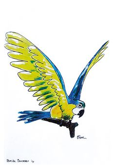 Catchii illustration, drawing, parrot, yellow, blue, fly away