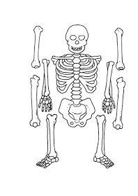 ...Το Νηπιαγωγείο μ' αρέσει πιο πολύ.: Ασπρόμαυροι πίνακες αναφοράς και κάρτες για το σώμα Human Body, Skeleton, Blog, Fictional Characters, Art, School, Art Background, The Human Body, Skeletons