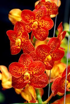 Shade Garden Flowers And Decor Ideas Orchidtalk Orchid Forums - Grow Orchids