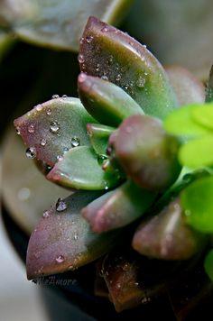 Succulent #succulentssimplified