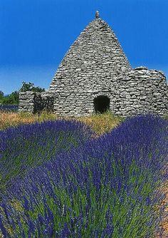 Borie au milieu de la lavande. Environs de Gordes (Provence)