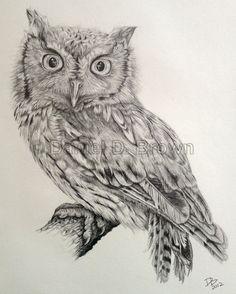 Owl Drawings | Eastern Screech Owl (Megascops asio), Daniel D. Brown, 2012, Pencil