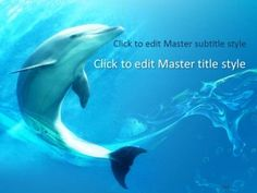 Free Dolphin PdPT Template