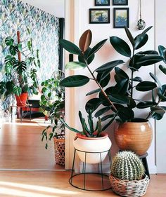 60 Plant Stand Design Ideas For Indoor Houseplants Indoor Plants Indoor Plants Decoration House Plants Mini Gardens Low Light Plants Ideas Plantas Indoor, Decoration Plante, Low Light Plants, House Plants Decor, Interior Plants, Botanical Interior, Stand Design, Booth Design, Home Design
