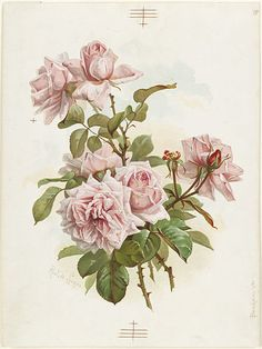 Pink roses - La France Roses ( 1861 -1897 approx) by Paul de Longpres ( 1855 - 1911) Chromolithograph ( press proof). Louis Prang & Co. Boston Public Library. Wikimedia