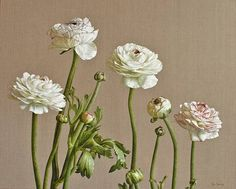"""Mia Tarney: """"Ranunculus"""", oil on linen."""