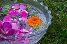 Flower Water | Herbal Academy of New England
