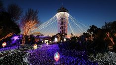 Enoshima's annual illumination is widely touted as one of the three biggest and most impressive light-up events in Japan, alongside the ones at Ashikaga Flower Tokyo Things To Do, Sparkling Lights, Tokyo Travel, Main Attraction, Beach Town, After Dark, Resort Spa, Holiday Travel, Nice View