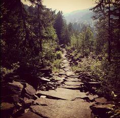 Walk this way! #outdoors #nature #walking #keepitclean #Switzerland #Schwyz #YouTooday