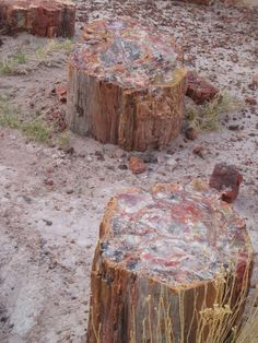 Petrified Forest National Park in Navajo and Apache counties in Arizona.