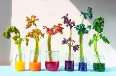 Pflanzen bunt färben - so geht's!