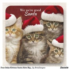 Four Baby Kittens Santa Hats Big Blue Eyes Beverage Coaster Cute Kittens, Baby Kittens, Cats And Kittens, Christmas Kitten, Christmas Animals, Christmas Time, Merry Christmas, Xmas, Funny Cat Videos