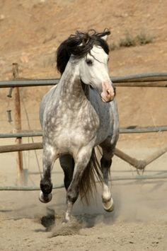 Quejio Iv - Stallion Directory