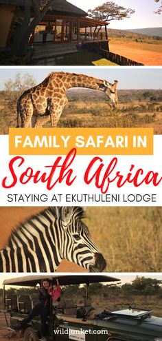family safari in south africa Pacific Destinations, Travel Destinations, Africa Travel, India Travel, Travel With Kids, Family Travel, Travel Guides, Travel Tips, Safari Holidays