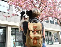 A cute picture of our Border Rucksack with Border Collie Joey and Susanne in Cologne Us Border, Border Collie, Cologne, Leather Backpack, Cute Pictures, Cycling, Backpacks, Adventure, Canvas