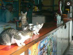 Bar cats in Lencois, Brazil