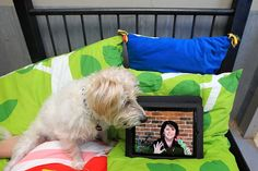 """Skype for dogs! Hanrob Pet Hotels is launching Australia's first pet skype service. """"Snuffy"""" 9 yrs old is pictured relaxing at the Heathcote Hanrob Pet Hotel whilst keeping in touch with his owner Jodie Garth vis skype. Picture: Cameron Richardson"""