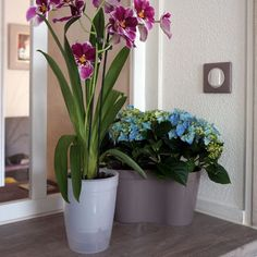 1000 images about orchidees on pinterest comment orchids and orchids garden - Arroser une orchidee phalaenopsis ...