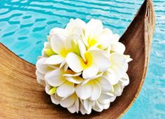 ball of flowers; Plumeria Flowers, Tropical Flowers, Plumeria Bouquet, Hawaiian Flowers, Hibiscus, Tiare Tahiti, Flower Quotes, Tropical Paradise, Flower Pictures