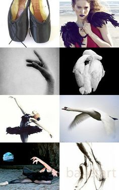 Black Swan--Pinned with TreasuryPin.com