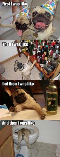 Drunk pugs