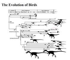 #Evolution #Birds