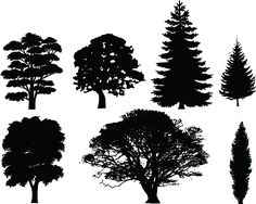 Tree Silhouettes | ... and white tree clip art image of conifer trees and deciduous trees