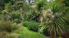 Image result for new zealand native garden