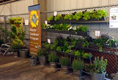 An edible rain gutter garden from the Master Gardener booth at the Bay Area Maker Faire.