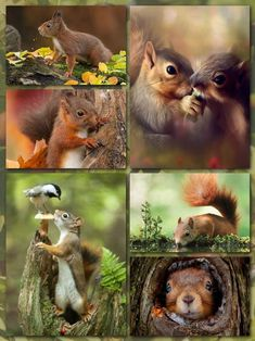~Katarina~Collage by Miss Katarina Love Collage, Beautiful Collage, Zoo Animals, Animals And Pets, Cute Animals, Wild Creatures, Woodland Creatures, Beautiful Creatures, Animals Beautiful