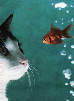 looking at the strange fishie by ~and-so-long