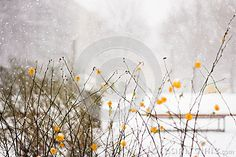 Beautiful snowfall and bright yellow flowers in the capital of Germany