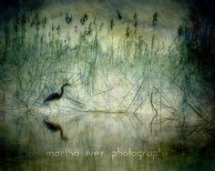 Heron Among Cattails by LunaSol on Etsy